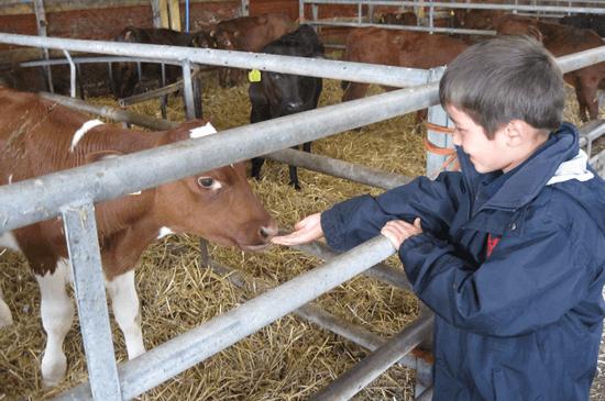 year-2-goodwood-farm